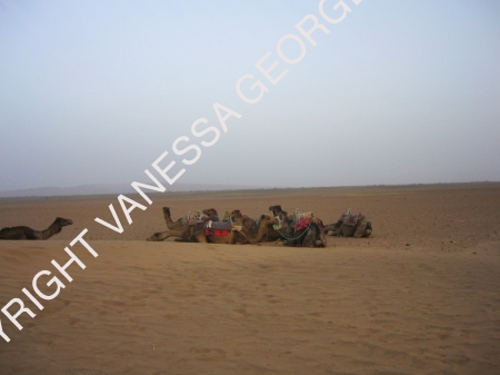 vers 5-6 heure du matin dans le Sahara